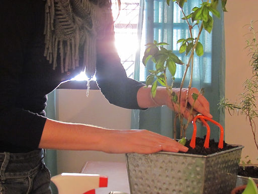 Horta de Ervas Medicinais e Culinárias (aula online e ao vivo)