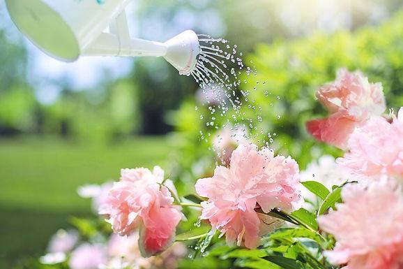 Aromaterapia para Plantas (18 de janeiro de 2020)