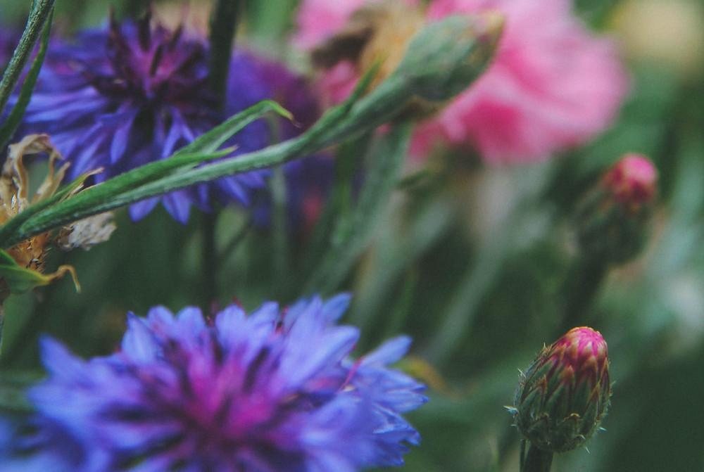 Linguagem das Plantas