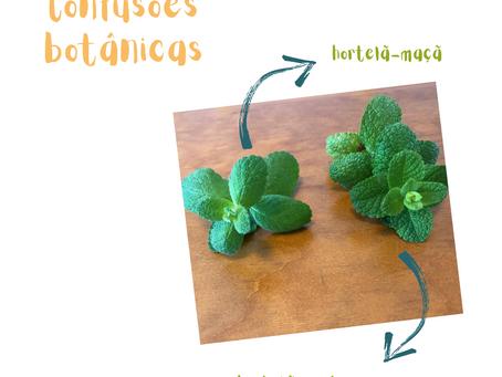 Confusões Botânicas: hortelãs maçã e portuguesa