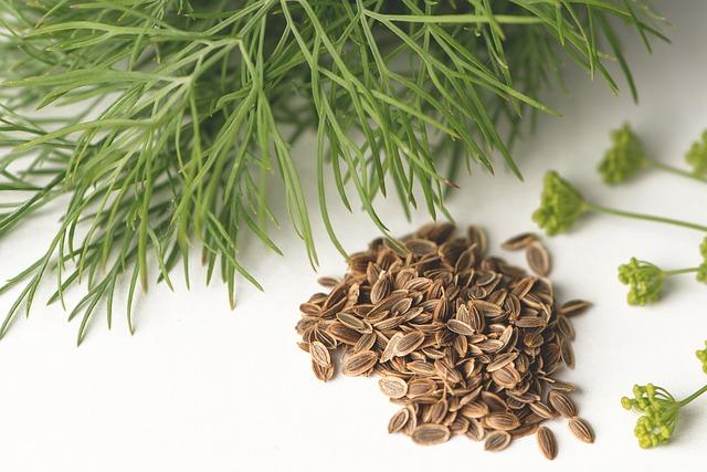 Folhas e sementes de dill