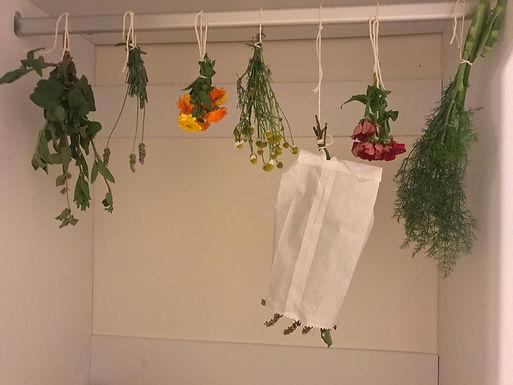 Oficina de Secagem Caseira de Ervas e Especiarias