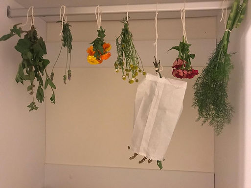 Desidratação Caseira de Ervas e Especiarias
