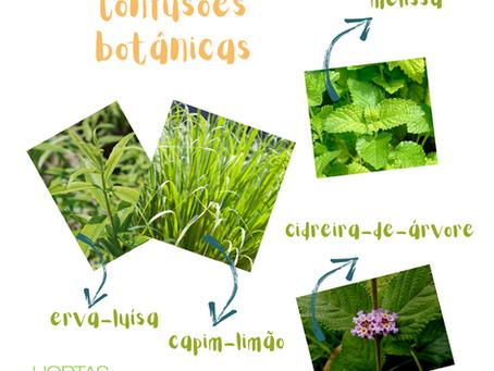 Confusões botânicas | Erva-cidreira