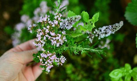 culinary-herbs-2614245_1920.jpg