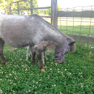 Donkeys-crop.jpg