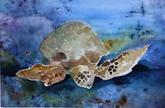Sea Turtle   $550
