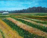 """Tulip Farm, RI"" | $300"
