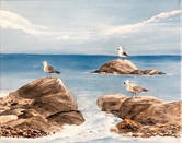 """Sea Gulls at Social Distancing""  
