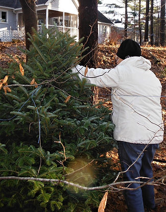 Give your holiday tree a second purpose