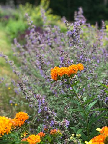 Favreau Garden