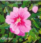 Rose of Sharon | $25