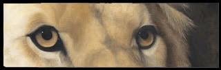 Lion Eyes | SOLD
