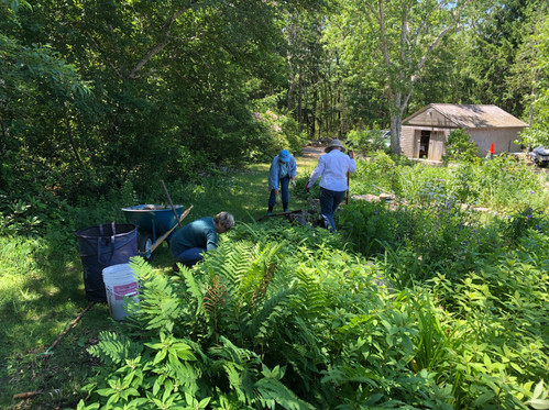 Working in the Alyce Favreau garden at the Hay Conservation Center 2019