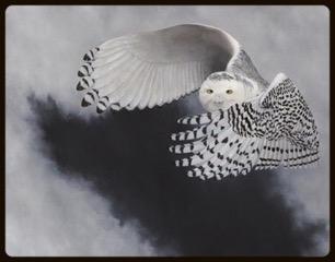 Snowy Owl | SOLD