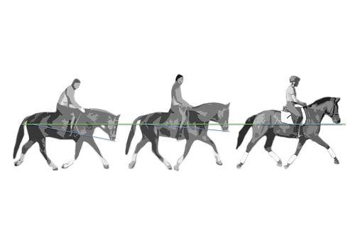 mobiler Reitunterricht, Beritt, Pferdeausbildung, Freizeitpferd, Gymnastizierung, gesund reiten, Dehnugshaltung, Vorwärst abwärts, Dressurausbildung, Springgymnastik, Grundausbildung, Reitpferd, Longieren, Seitengänge, Traversale, Schulterherein, Volte, Hufschlagfiguren, klassisch, Balance, Gleichgewicht, Remonte,