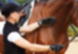 mobiler Reitunterricht, Beritt, Pferdeausbildung, Freizeitpferd, Gymnastizierung, gesund reiten, Dehnugshaltung, Vorwärst abwärts, Dressurausbildung, Springgymnastik, Grundausbildung, Reitpferd, Longieren, Seitengänge, Traversale, Schulterherein, Volte, Hufschlagfiguren, klassisch, OCC, OsteoConcept Coach