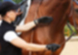 mobiler Reitunterricht, Beritt, Pferdeausbildung, Freizeitpferd, Gymnastizierung, gesund reiten, Dehnugshaltung, Vorwärst abwärts, Dressurausbildung, Springgymnastik, Grundausbildung, Reitpferd, Longieren, Seitengänge, Traversale, Schulterherein, Volte, Hufschlagfiguren, klassisch