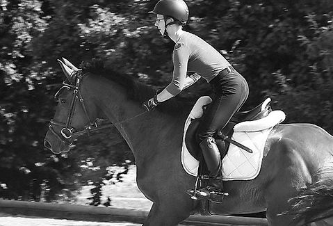 Pferdeausbildung _vielseitig_Springgymna