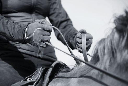 mobiler Reitunterricht, Beritt, Pferdeausbildung, Freizeitpferd, Gymnastizierung, gesund reiten, Dehnugshaltung, Vorwärst abwärts, Dressurausbildung, Springgymnastik, Grundausbildung, Reitpferd, Longieren, Seitengänge, Traversale, Bodenarbeit, Akademische reitkunst, Zügelführung