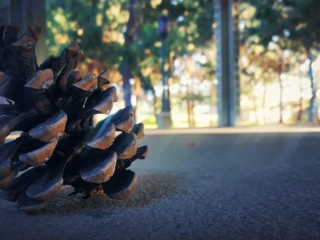 sno cones have no morals