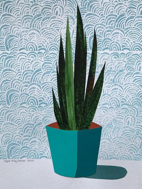 Snake Plant (blue pot)