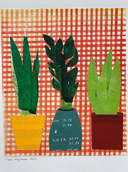 Plants Trio (checkered cloth)