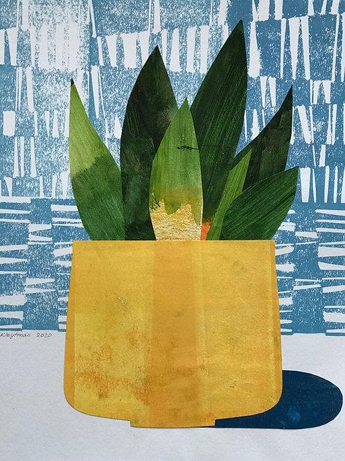 House Plants: Snake plant (yellow pot)
