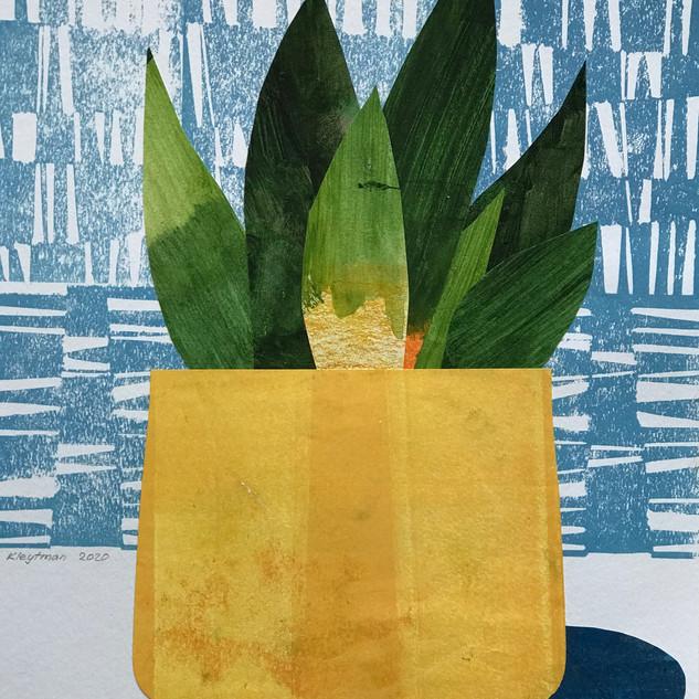 Snake Plant Yellow Pot