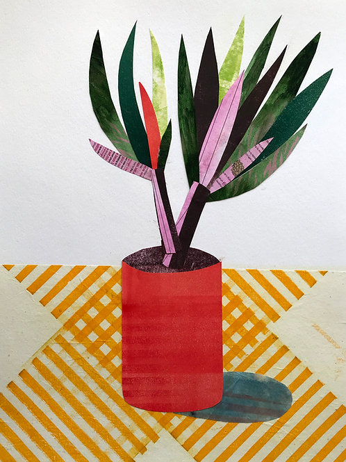 Dracena in a Red Pot