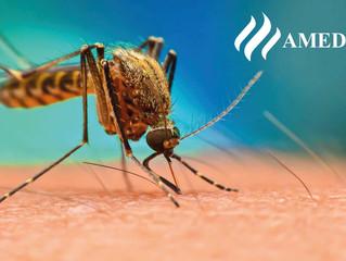 Acciones contra el dengue que debes transmitir a tus pacientes
