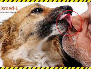 ¿Pueden los perros de tus pacientes contraer Coronavirus Covid-19?