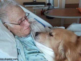 Pacientes graves podrían mejorar con la compañía de un perro