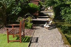 DSC_0184 ducks1.JPG