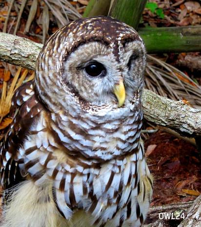 OWL25_Website.jpg