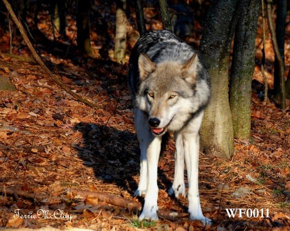 WF0011 Web.jpg