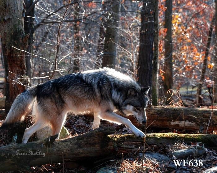 WF638.web.jpg