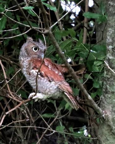 OWL03_Website_8.02.16020.jpg