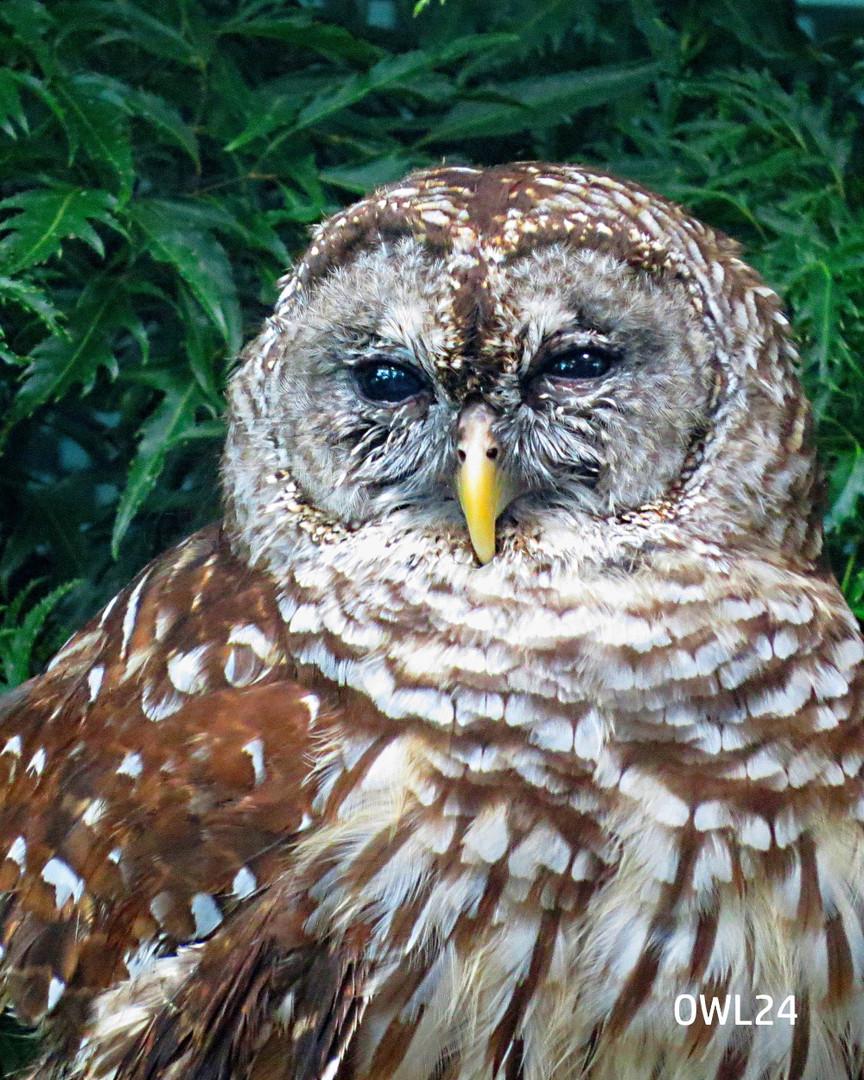 OWL24_webpage_8x10.jpg