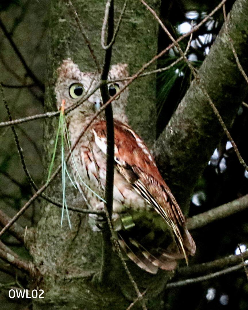 OWL02_Webpage_8.02.16 025.jpg