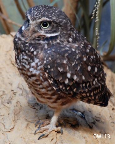 OWL13_webpage.jpg