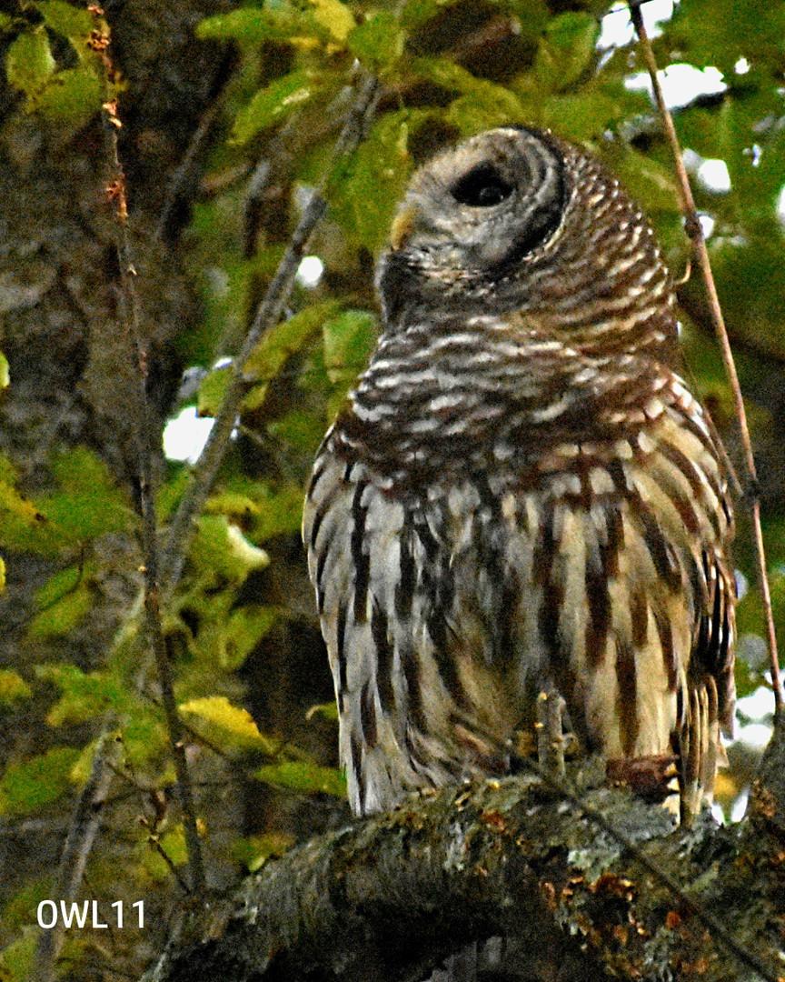 OWL11_8x10__DSC0159.jpg