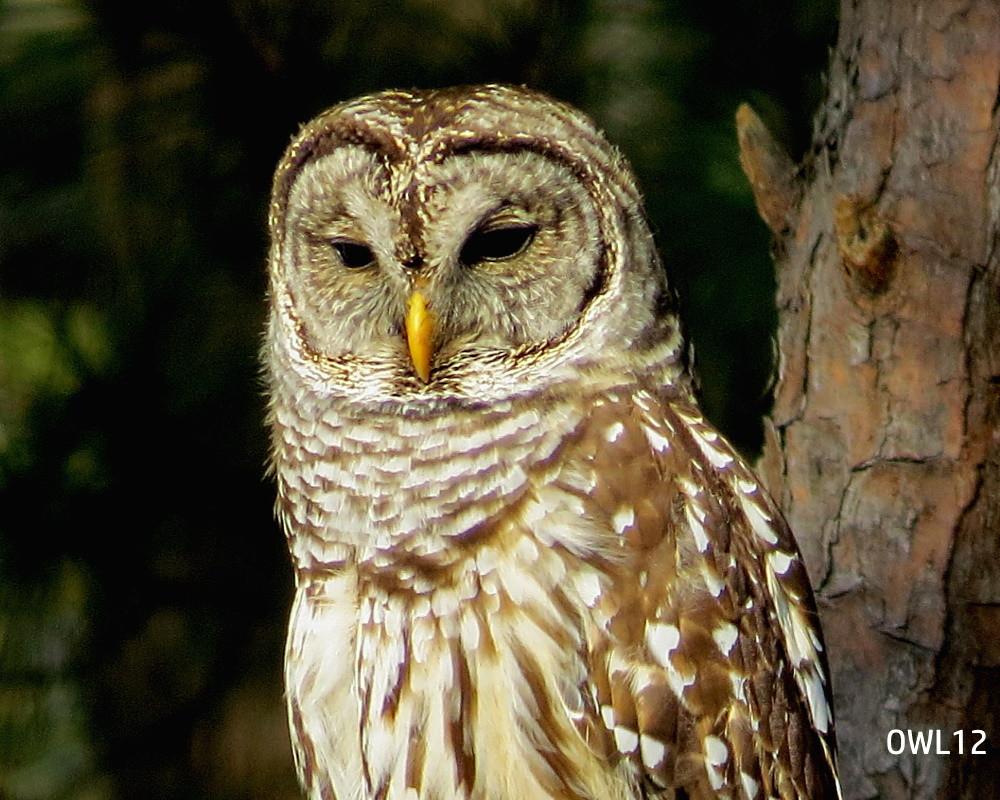 OWL12_webpage_IMG_4309.jpg