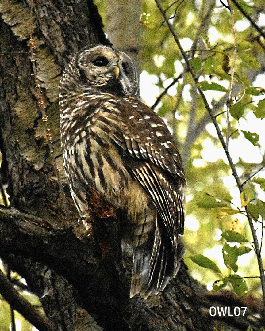 OWL07_8x10_DSC0178.jpg