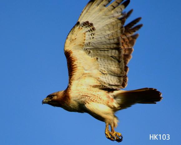 HK103.webpage_DSC0198 (2).jpg