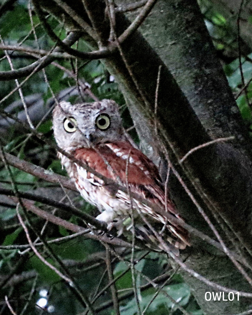 OWL01_Webpage_8.02.16 017.jpg