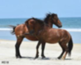 MS.18.Mustangs_8x10_DSC0126 (6).jpg