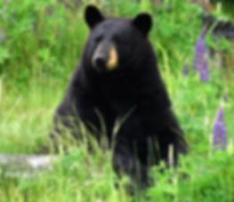 Bears.homepage.DSC_5569 (3).jpg