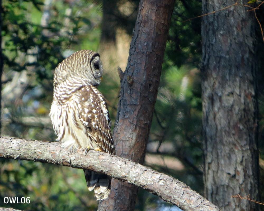 OWL06_8x10_IMG_4269.jpg