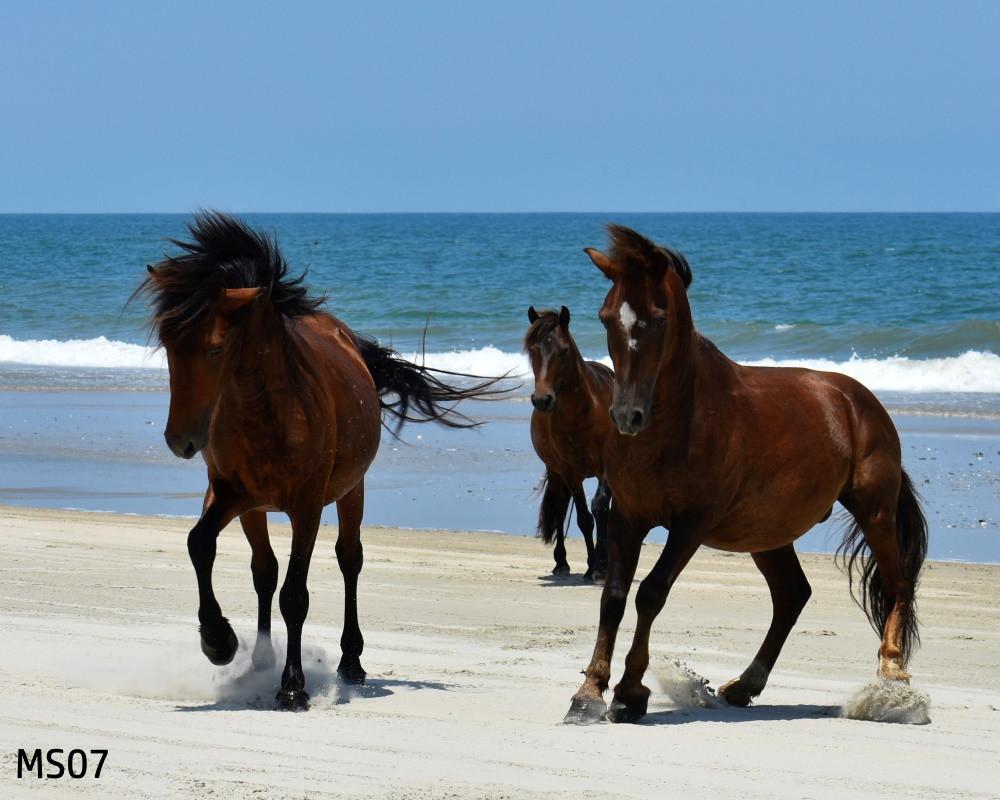 MS.07.Mustangs_8x10_DSC0115 (7).jpg